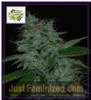 Cream of the Crop Auto Narcotherapy Fem 5 Seeds